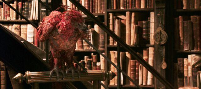 File:Harry-potter2-movie-fawkes.jpg