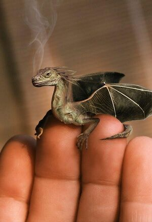Rogogon miniaturka