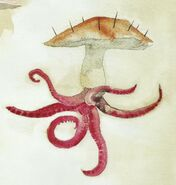 Chorbotek - ilustracje Olivii Lomenech Gill