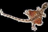Летучий дракон (Draco volans)