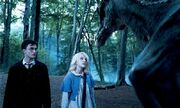 Harry and Luna with Thestral