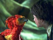 Feniks patrzący na Harrego Pottera
