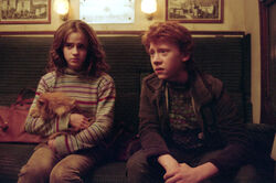 POA HQ still Hermione Ron Crookshanks