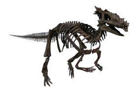 Дракорекс хогвартский 02