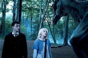 Luna pokazuje Harry'emu testrale