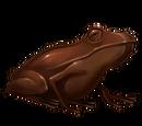 Шоколадная лягушка
