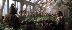 Professor Sprout greenhouse 1