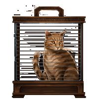PM-Item GingerCat