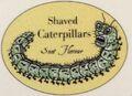 ShavedCaterpillars.jpg