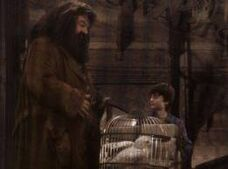Hagrid z harrym