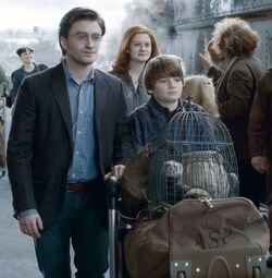 Harry Ginny e Albus
