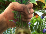 Mandrake