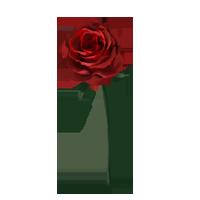 PM-Item RedRose