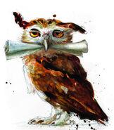 Sowa - ilustracje Jima Kaya
