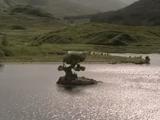 Wyspa nieśmiałków