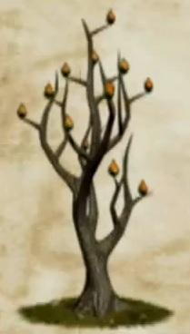 Fire Seed Bush