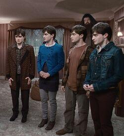 Préparation bataille des sept Potter