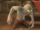 Ghoul HM.png