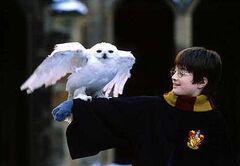 Harry&hedwig