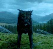 Sirius als Faunaat