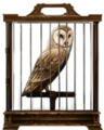Barn-owl-lrg.png