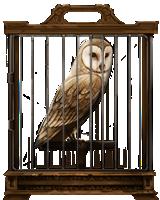 image barn owl lrg png harry potter wiki fandom powered by wikia