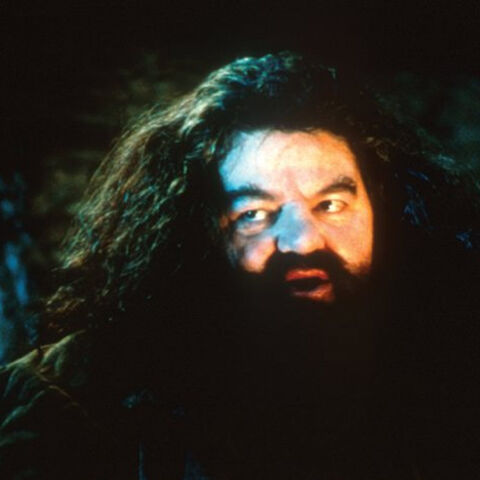 Хагрид навещает Гарри