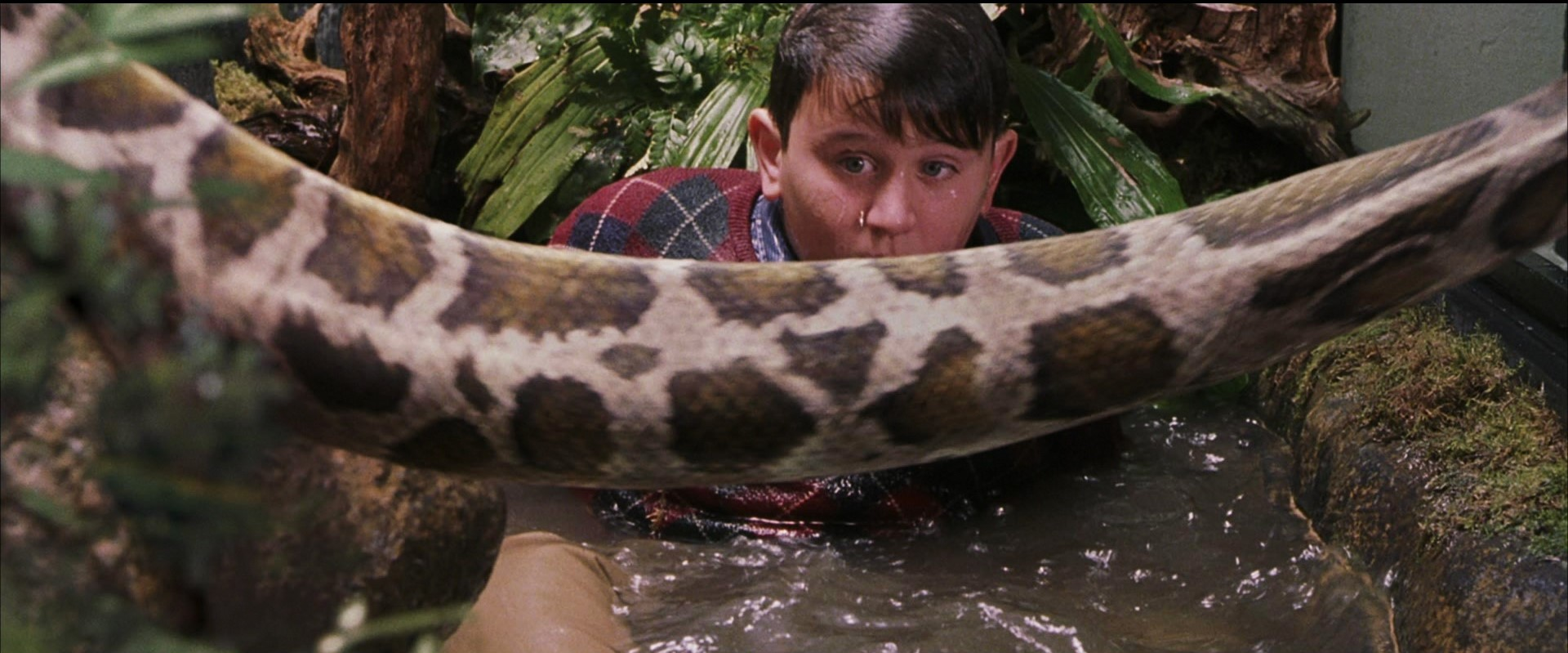Image result for dudley snake