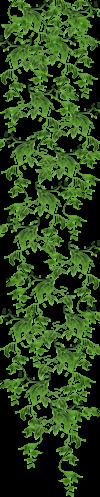 Nav-Botanique lierre 1