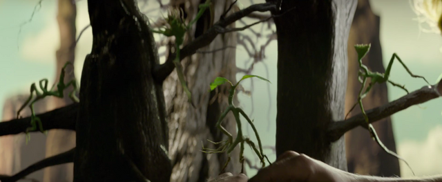 File:Bowtruckles.png