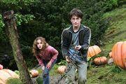 Harry e hermione salvano fierobecco