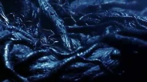 """Diabelskie sidła w angielskiej wersji filmu """"Harry Potter i Kamień Filozoficzny"""""""