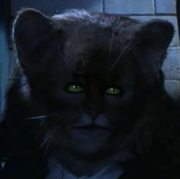 Hermiona jako kot