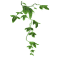 Poison-ivy-lrg.png