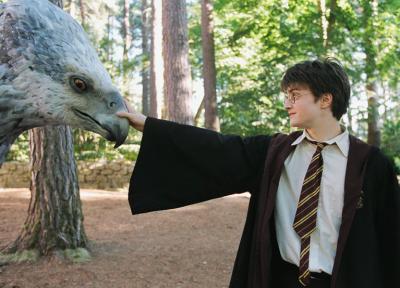 Seidenschnabel Harry Potter