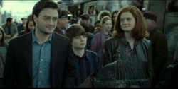 Harry i Ginny dorośli