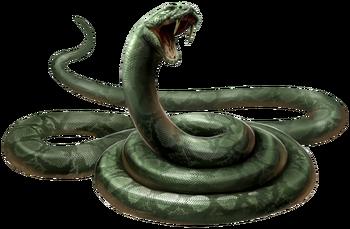 Jako wąż