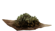 DriedNettles