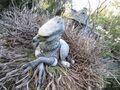 Buckbeak.jpg