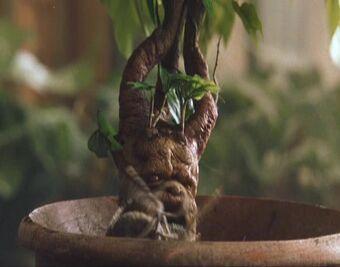 Stewed Mandrake Harry Potter Wiki Fandom