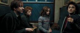 Harryremus