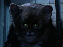 Hermionecat