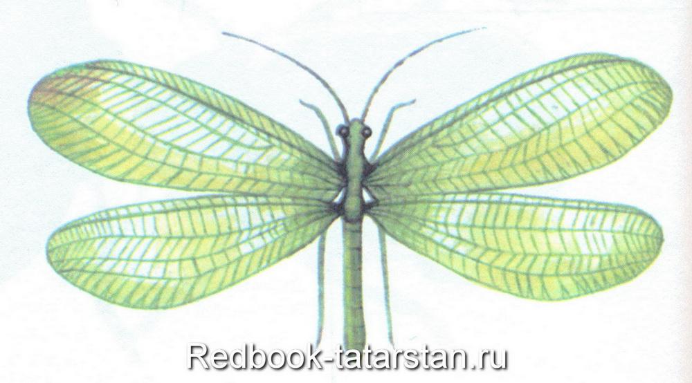 Мошки с прозрачными крыльями - как избавиться?