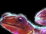 Fire Dwelling Salamander