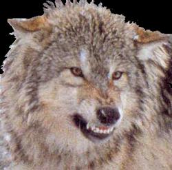 RemusWerewolf