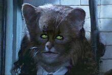 Hermione-Cat