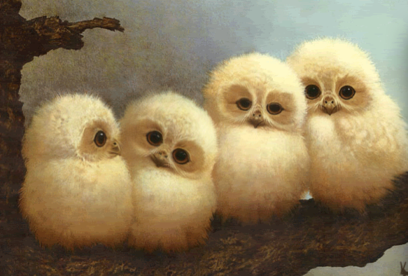image baby barn owls png harry potter next gen roleplay wiki