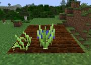 Scallion Growth