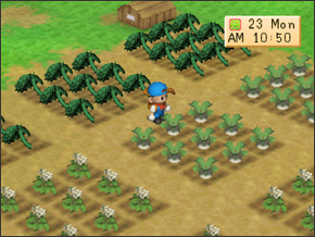 Spring Crops | Harvest Moon Back To Nature Wikia | FANDOM powered by