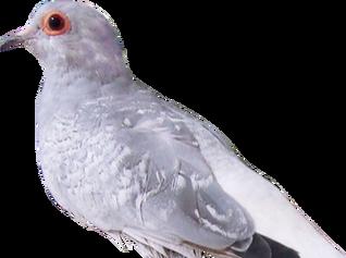 Yuki Birdsprite